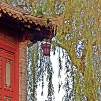 Китайский  фонарик. :: Виталий Селиванов