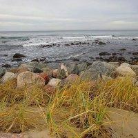 Балтийское побережье в ноябре :: Маргарита Батырева