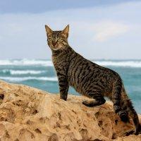 Кошки живущие у моря :: Николай Волков
