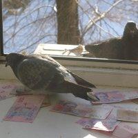 """Некоторые """"голуби мира"""" сидят на военных деньгах... :: Алекс Аро Аро"""