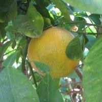 Апельсин 16 декабря :: Герович Лилия
