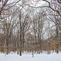 Зимнее время ... :: Kirill