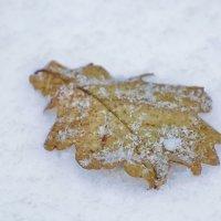 Одиноко лежа на снегу. :: Paparazzi