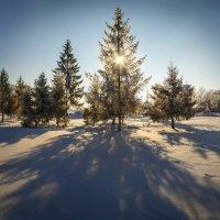 Искрится снег под солнцем, хрустит по снегу след, и ничего прекрасней, картины этой нет :: Лидия Цапко