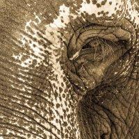 Печальный слон.... :: Андрей Потапов