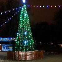 Зажглись новогодние огни... :: Тамара (st.tamara)