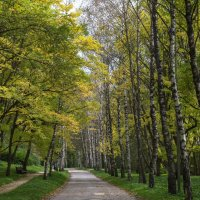 Березовая аллея в Курортном парке Кисловодска :: Екатерина Г.