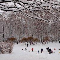 Веселая зима...:))) :: анна нестерова