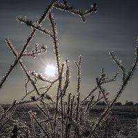 Морозко прошелся. :: Виталий Павлов