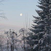 Зимнее утро :: Виктор