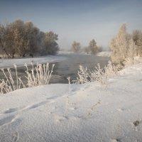 морозное утро №5 :: Владимир Носов