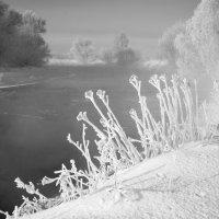 морозное утро №1 :: Владимир Носов