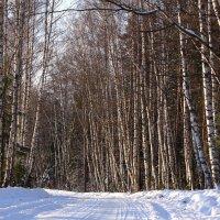 По зимней дороге :: Татьяна Ломтева