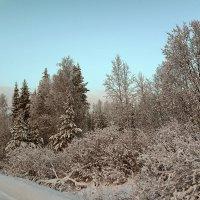 Заснеженный лес :: Виктор Бондаренко