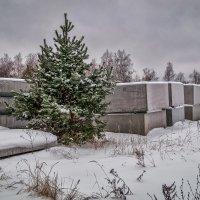 Ёлочка :: Андрей Дворников