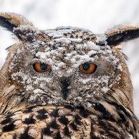 Зима. :: Виктор Шпаков