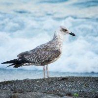 чайка :: Юлия Морозова
