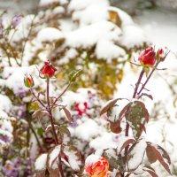 осенний снег :: Oksana Verkhoglyad