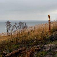 Куршский залив :: Андрей С.