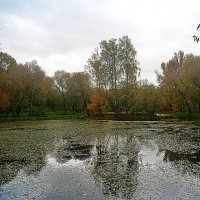Москва.Кусково. осень 2016 :: megaden774