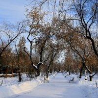Прогулка в парке Павлика  Морозова. :: Пётр Сесекин