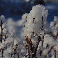 Присел снежок отдохнуть :: Николай Масляев