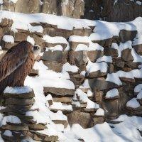 Зоопарк 01 :: Игорь Гарагуля