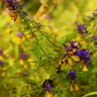 луговые цветы :: оксана