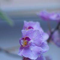 Цветок :: Юлия Фотограф
