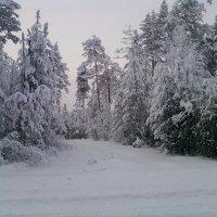 Зимний лес :: Надежда Малинкина