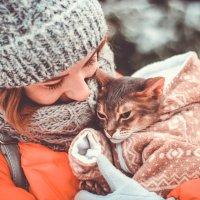 Абиссинская кошка :: Людмила Ильина