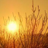 зимнее солнце :: Марина