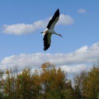 Октябрь. Свободно летающие птицы над сафари... :: Юрий Поляков