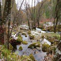 Таёжный ручей Сойтка в октябре :: MaOla ***