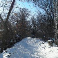 Прогулка вдоль озера солнечным днем... :: марина ковшова