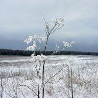 В поле :: Елена Павлова (Смолова)