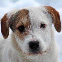 Безымянный щенок :: Dr. Olver  ( ОлегЪ )