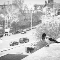 Ворона :: Ольга Мансурова