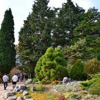 По ботаническому саду :: Виктор Шандыбин