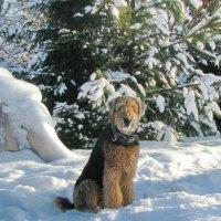 А мне не страшен снег и мороз :: Лара Симонова