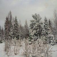 Зима 2016 :: Анатолий