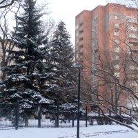 Зима в городе... :: Тамара (st.tamara)