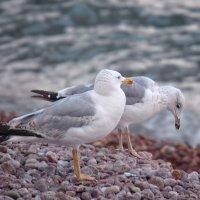 чайки :: Юлия Морозова