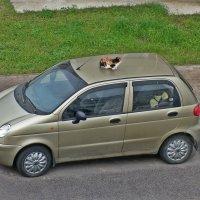 Маленькая победа над собаками :: Натали Пам