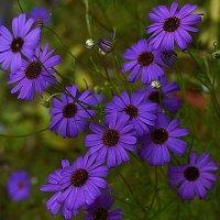 Цветы :: Татьяна