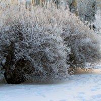 Зимний жасмин :: Ирина Румянцева