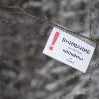 предупреждение для вОлков и волкОв :: Сергей Стреляный