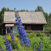 Синие метёлочки :: Жанна Литуева