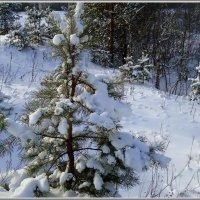 В зимнем лесу :: Ирина Голубева