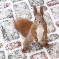 в парке  зимой :: георгий петькун